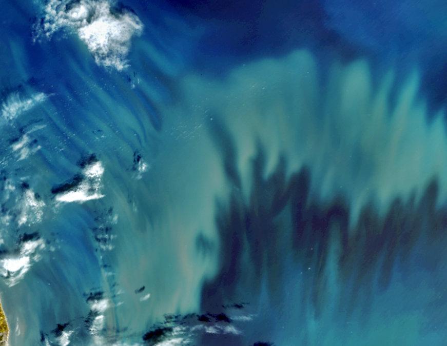 Phytoplankton in the North Sea